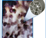 Fluidized Bed Bioreactor